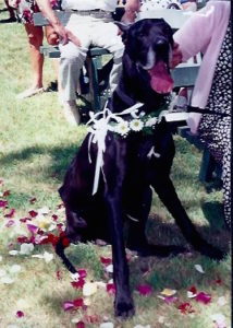 Jim as ring bearer at our wedding.