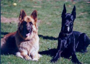 Jim & Sampson