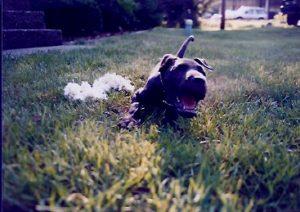 Puppy Jim